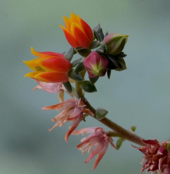 9 Vetplantje - oud en nieuw